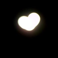 photo of a heart-shaped hedge